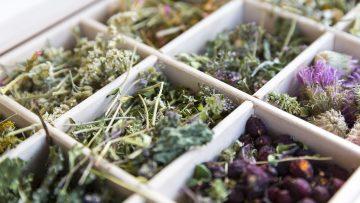 Heilpflanzen: Die Top 6 für Frauen